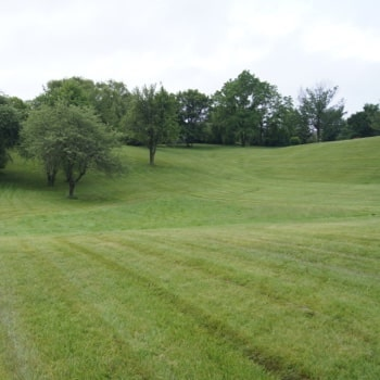 Large field on the Tyndale campus